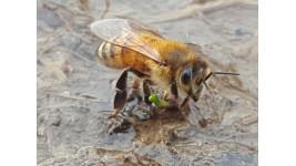 03 - Les abeilles